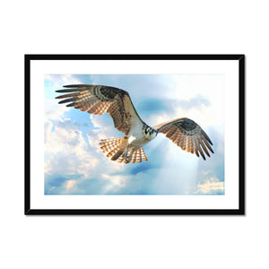 Osprey in the Rays Framed & Mounted Print
