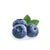 Anthocyanin-rich bilberry extract