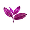 Alluvia® Purple Tea