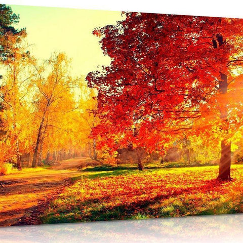 Autumn Trees And Leaves Canvas