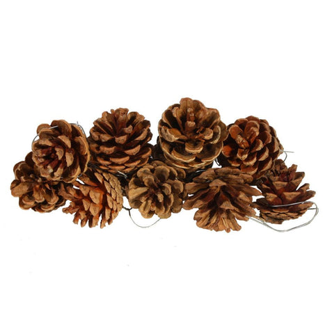 10 Decorative Pine Cones