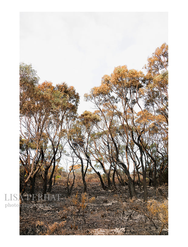 Aftermath -  fine art print by Australian photographer Lisa Perhat