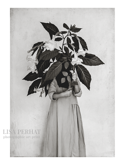 Angels Trumpets -  fine art print by Australian photographer Lisa Perhat