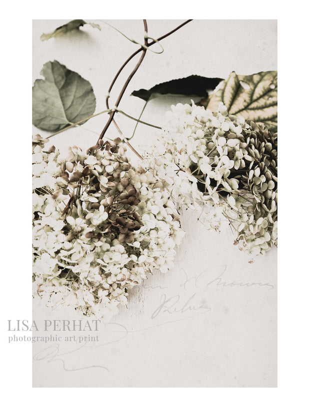 Beautiful Things - fine art print by Australian photographer Lisa Perhat