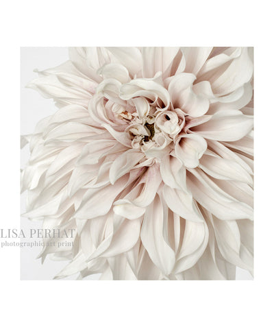 Bloom - fine art print by Australian photographer Lisa Perhat