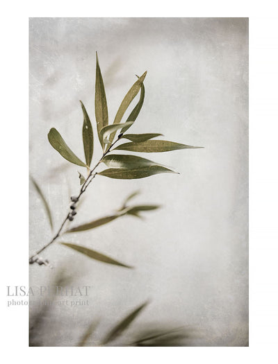 Botany - fine art print by Australian photographer Lisa Perhat