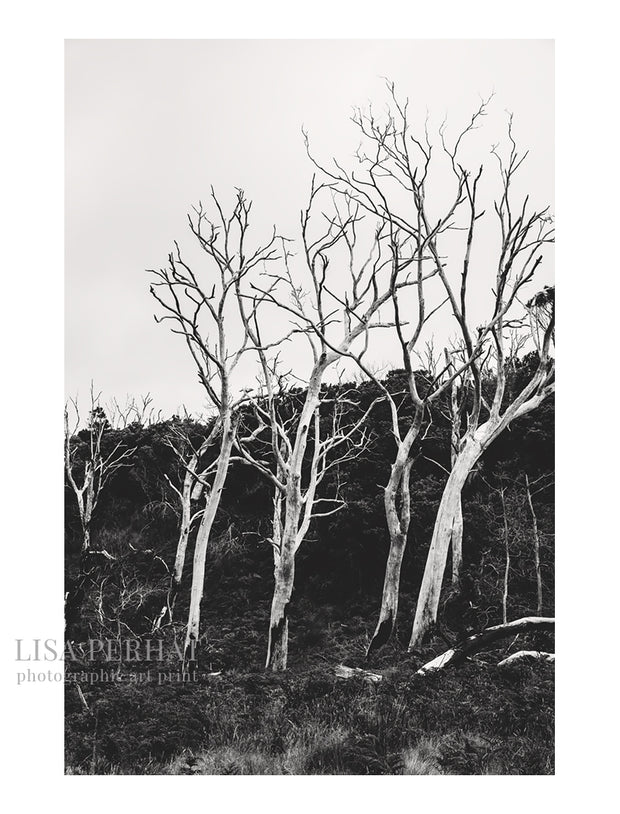Guardians - fine art print by Australian photographer Lisa Perhat