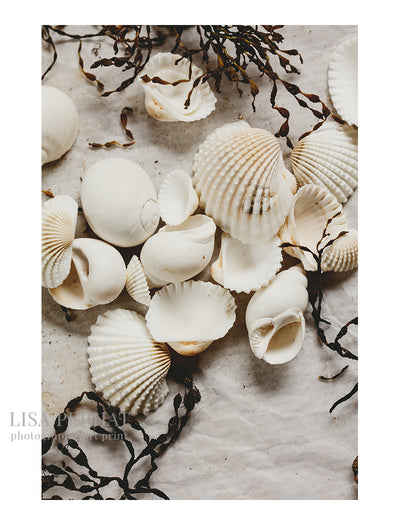 Seashells Number Two - fine art print by Australian photographer Lisa Perhat
