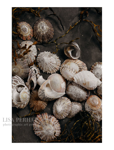 Seashells - fine art print by Australian photographer Lisa Perhat