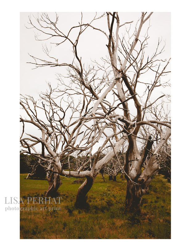 The Immortals - fine art print by Australian photographer Lisa Perhat