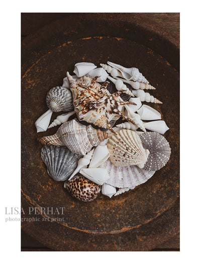 The Shell Collector - fine art print by Australian photographer Lisa Perhat