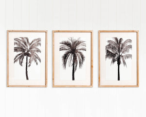 Maui Palms Framed Artwork - Set of 3