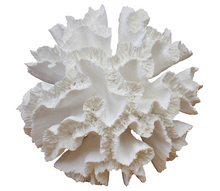 Load image into Gallery viewer, Seville White Faux Coral