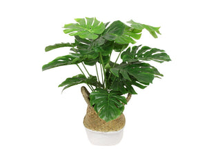 Artificial Monstera in Moroccan Two Tone Wicker Basket