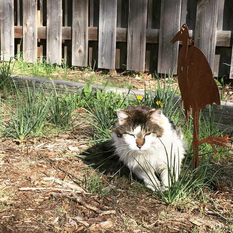 Susanna's cat, Zeus, helping her get grounded while she weeds her yard.