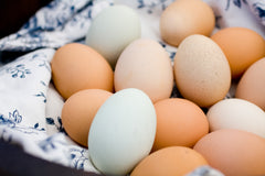 Jodar Farm eggs are available for delivery in Boulder County Colorado.