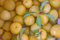 The Shiro Plum from Ela Family Farms available in Broomfield, Colorado from Back to Basics Kitchen