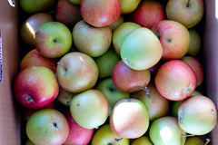 Arlet Apple from Ela Family Farms - our favorite fruit farmer - on the Western Slope