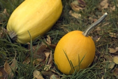 Learn how to cook squash from Susanna at Back to Basics Kitchen, Broomfield, CO.