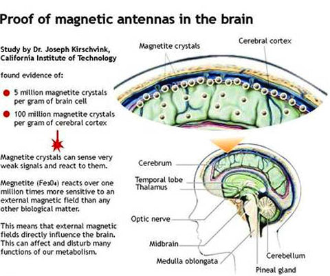 EMF Radiation Cause CANCER! Protect Yourself with Orgonite