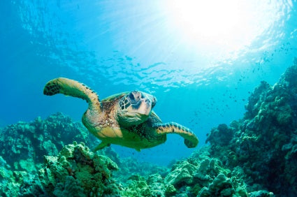 Snorkeling Shipwreck and Underwater Museum – CancunProTours