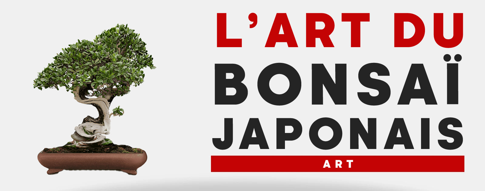 L Art du Bonsai Japonais