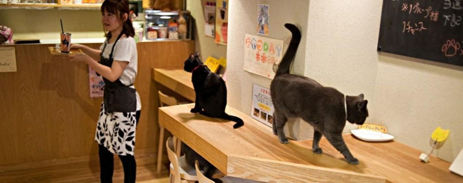 bar café chat japon
