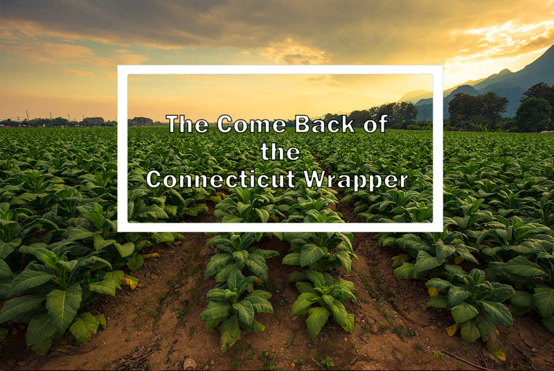 The Comeback of Connecticut Wrapper