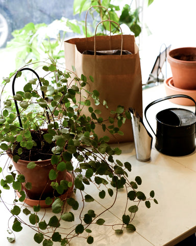 Plant and tools