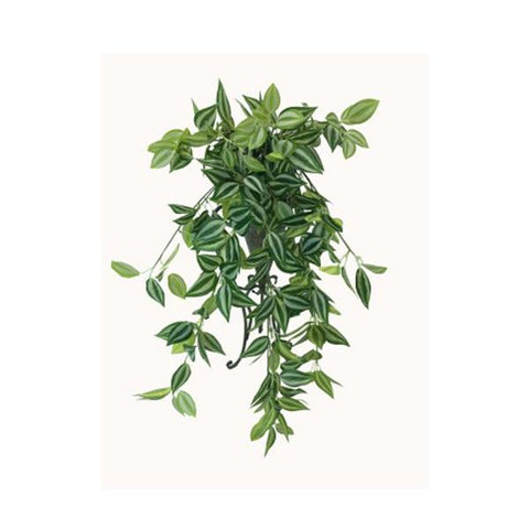 Mixed White And Green Hanging Philodendron Bush 80 Cm