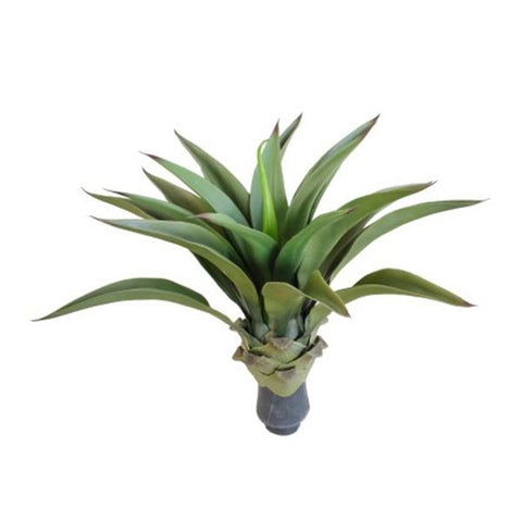 Uv Agave 50 Cm No Pot