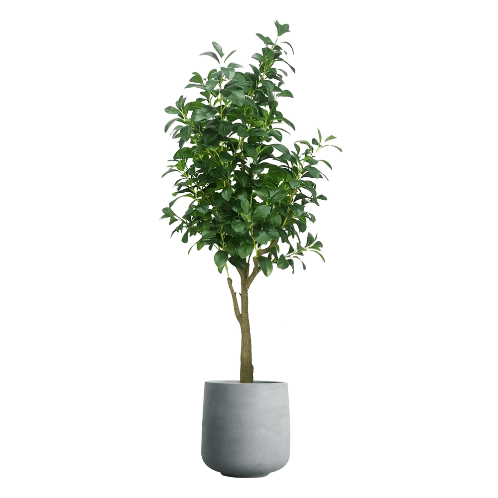 Realistic Ornamental Watercress Potted Faux Plant 155cm in Concrete Planter