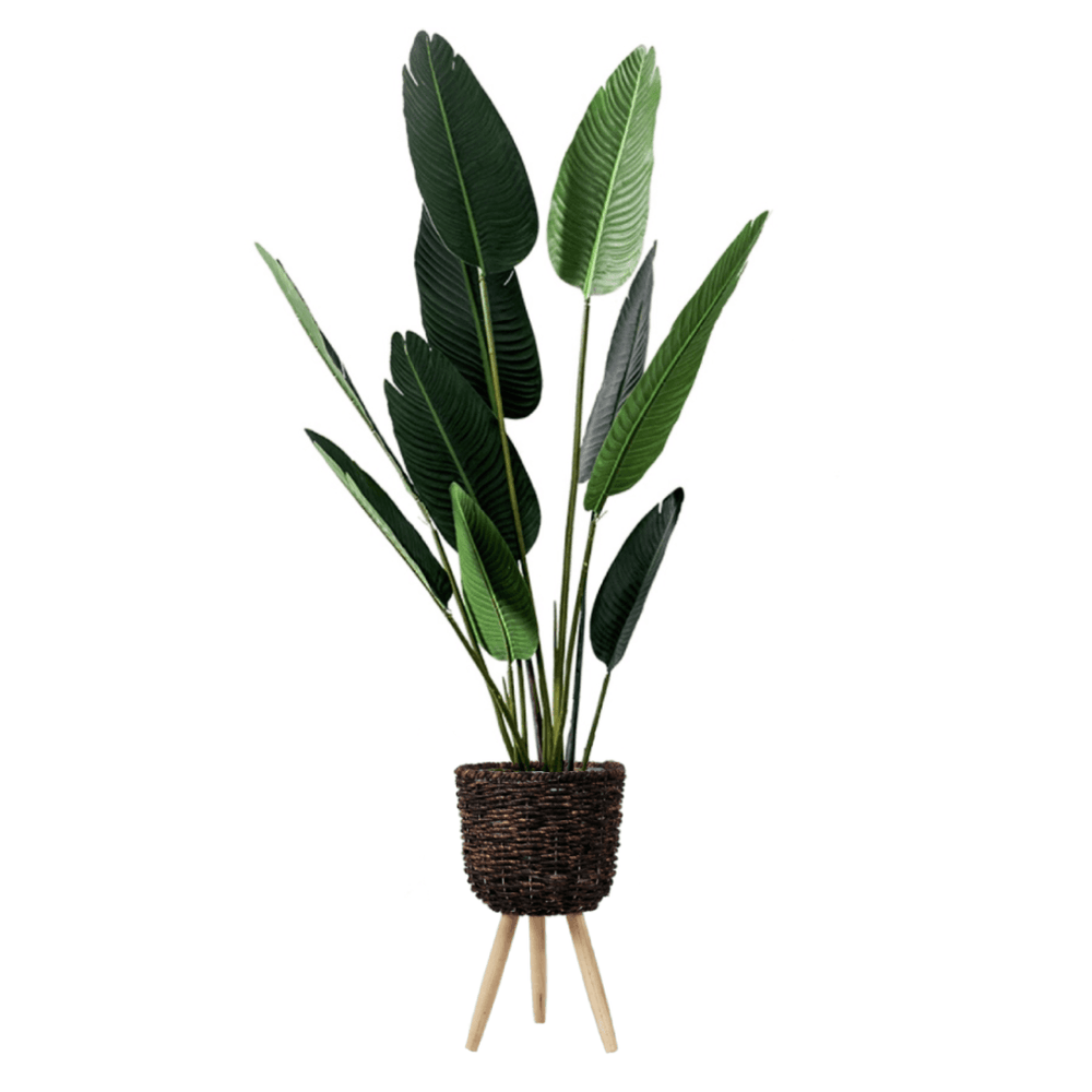 Potted Faux Traveller's Ravenala Palm Tree 160cm with Brown Basket Stand - Propstation