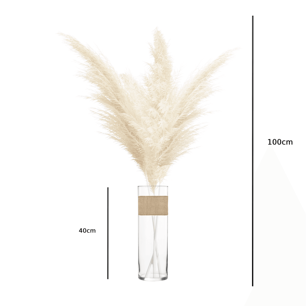 Dried Preserved Pampas Grass Creamy White in Cylinder Glass Vase - Set of 6 - Propstation