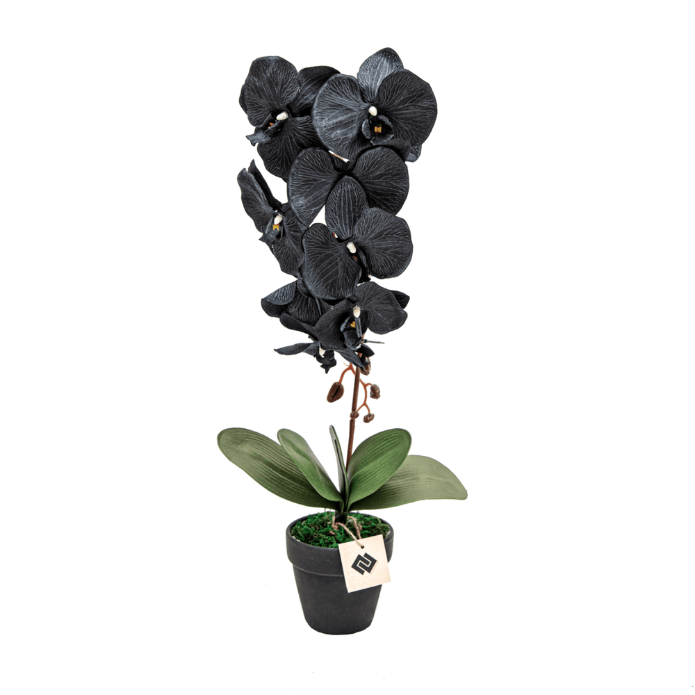 Artificial Phalaenopsis Silk Rustic Black Orchid Flower in Ceramic Pot