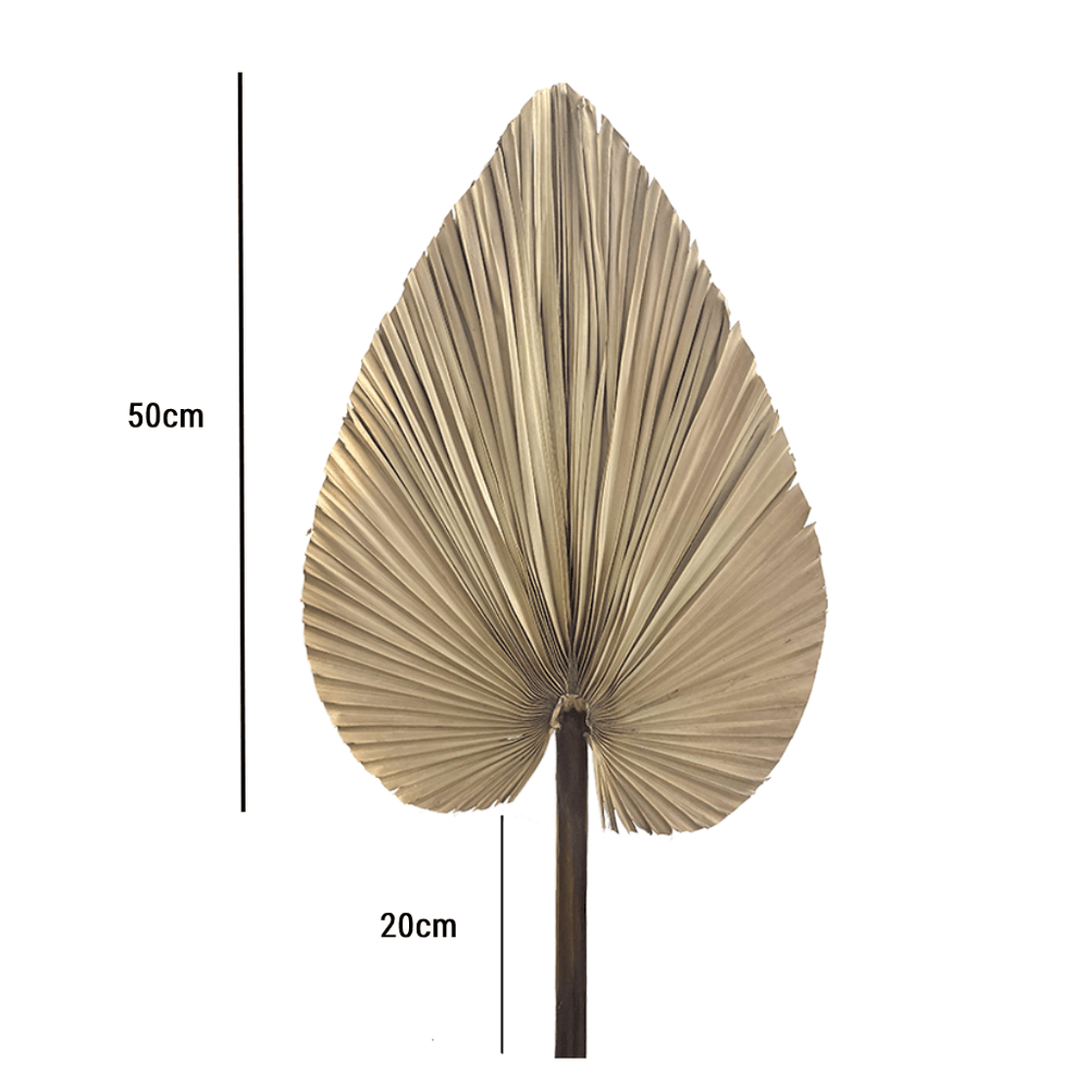 Dried Natural Palm Leaf Decorative Stem Bunch 3pcs - Propstation