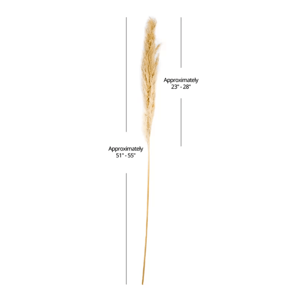 Real Dried Long Preserved Plumes Pampas Grass Natural - Propstation