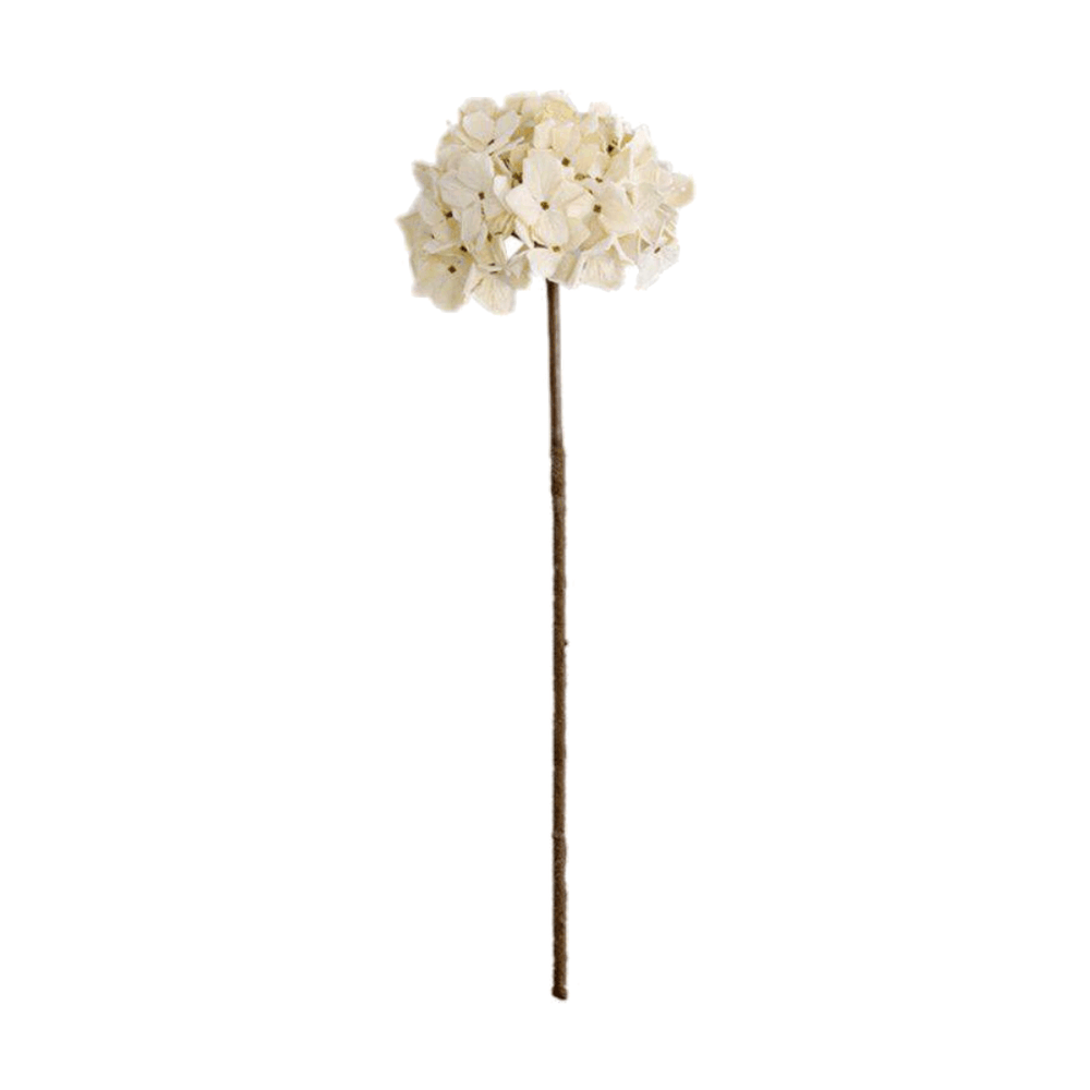 Rustic Preserved Dried Hydrangea Flower - White - Propstation
