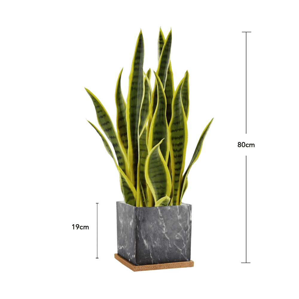 Potted Faux Succulent Sansevieria Snake Plant 80cm in Ceramic Box Marble Planter