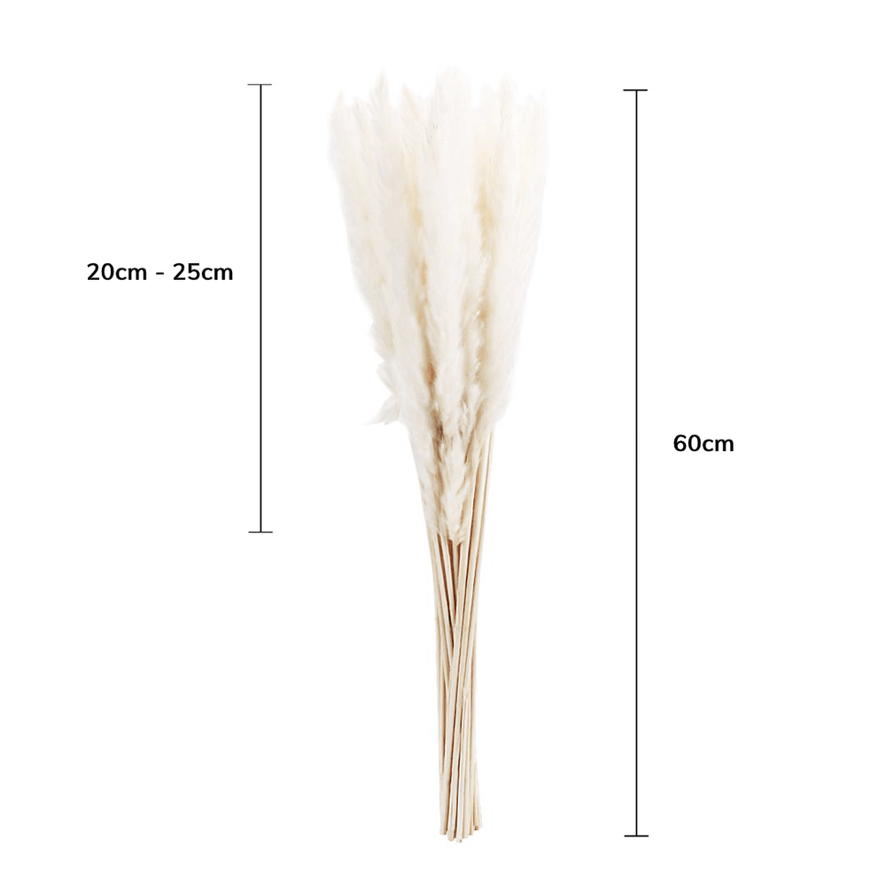 Natural Dried Preserved Reed Pampas Grass Ornamental - White - Propstation