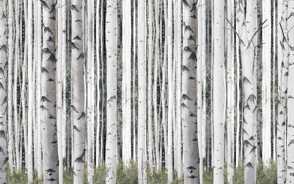 Birch trees mural pepinshop for Birch trees mural