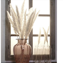 Load image into Gallery viewer, Natural Dried Pampas Grass 7 pcs
