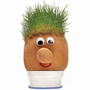 Mr Grass Head