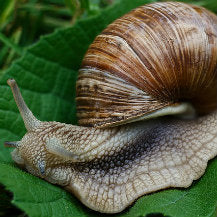 How To Remove Slugs & Snails