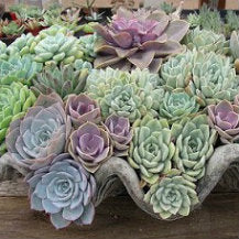 Tips For Successful Succulents