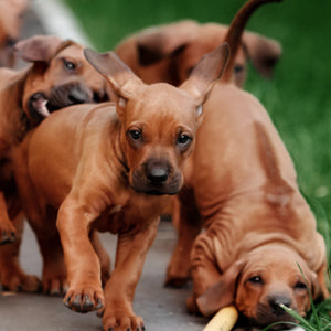 Pooches and Porches: Keeping Your Dog Safe in the Garden