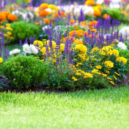 Water your Way to a Flourishing Flower Patch