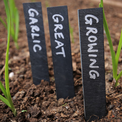 How to Grow Great Garlic