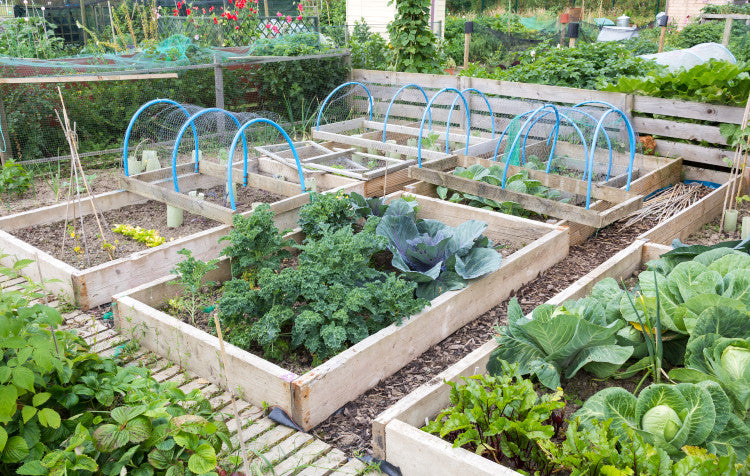 Starting Your Own Organic Veggie Patch