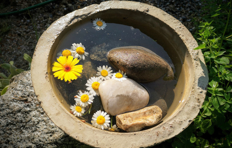 water source for bees